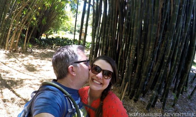 ma_bamboo01_wm